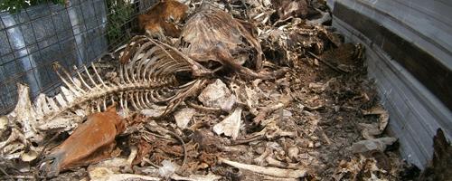 backyard-slaughter-cuesta