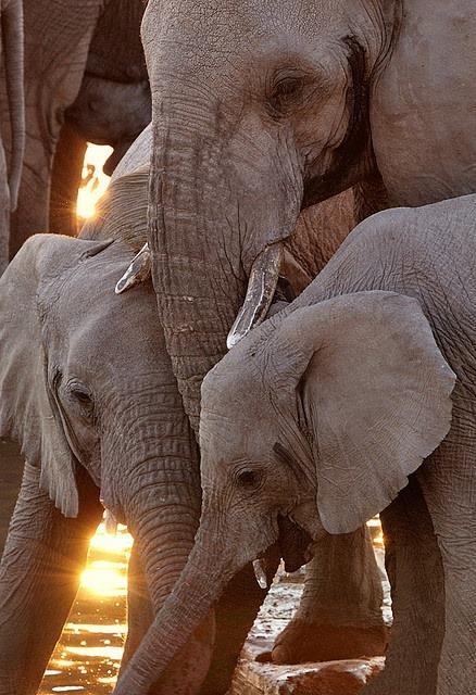 elefants3
