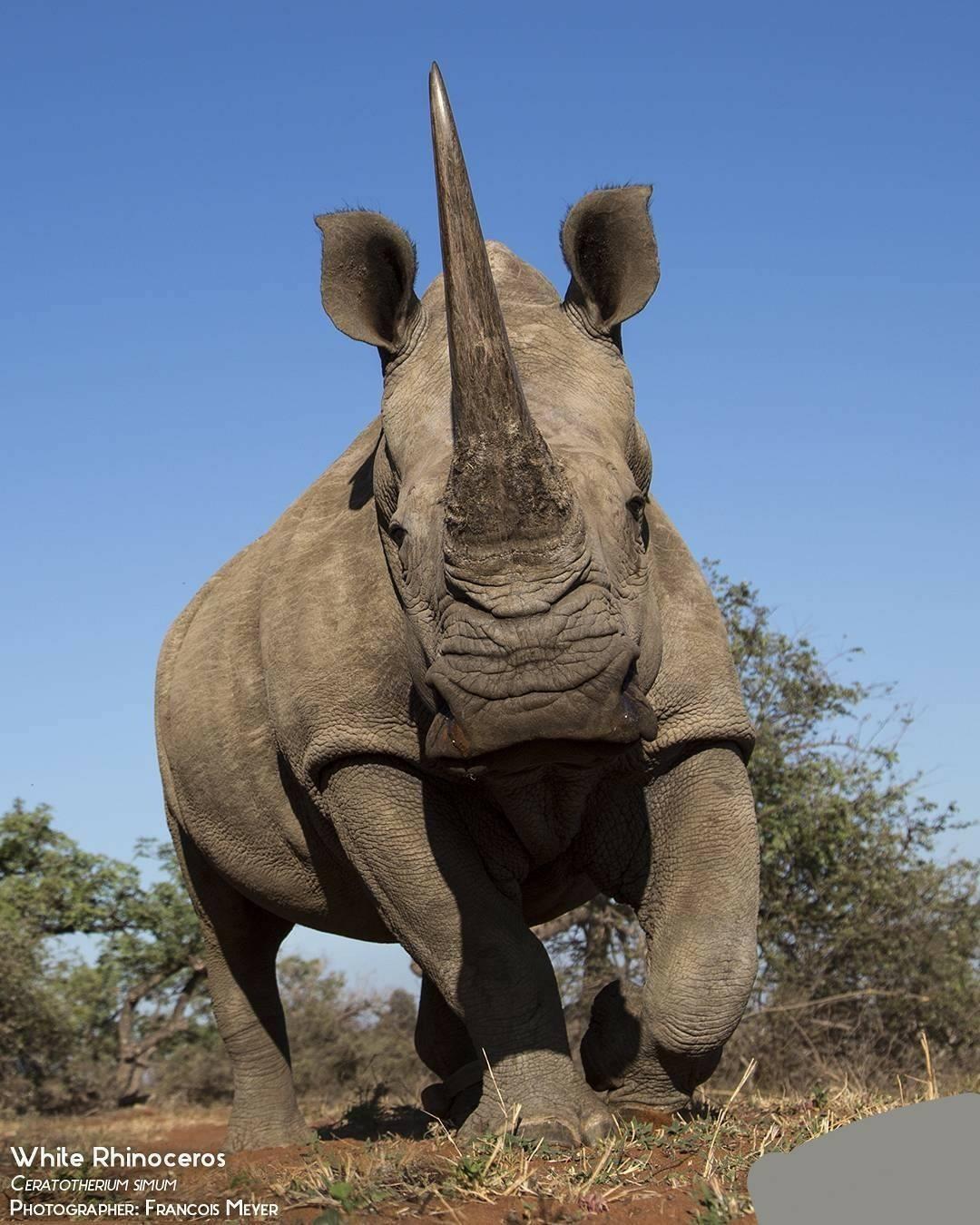 rhinos3