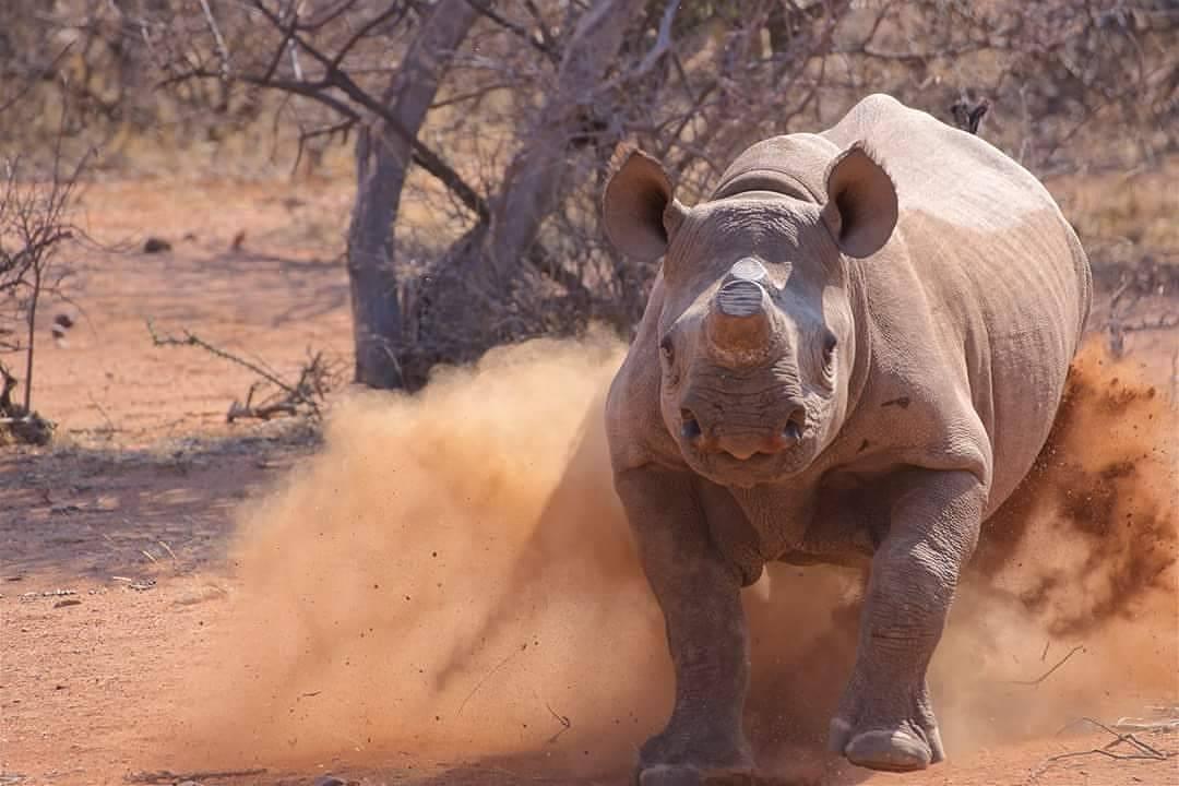 rhinos6
