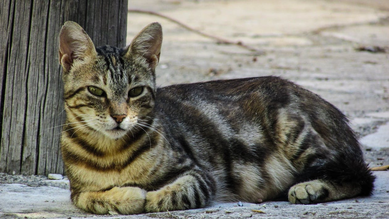 cat-resting-looking-street