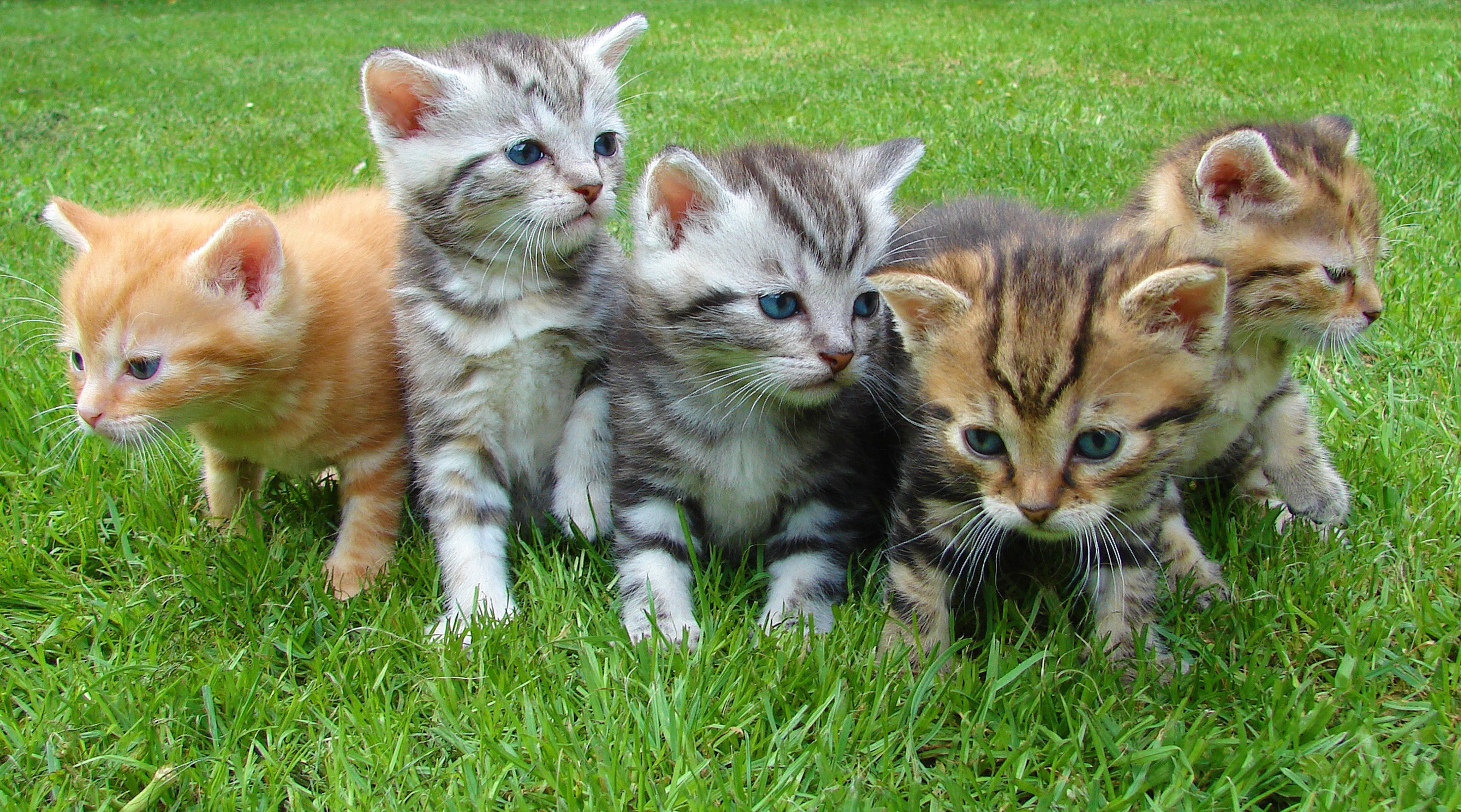 kittens-cat-cat-puppy-rush