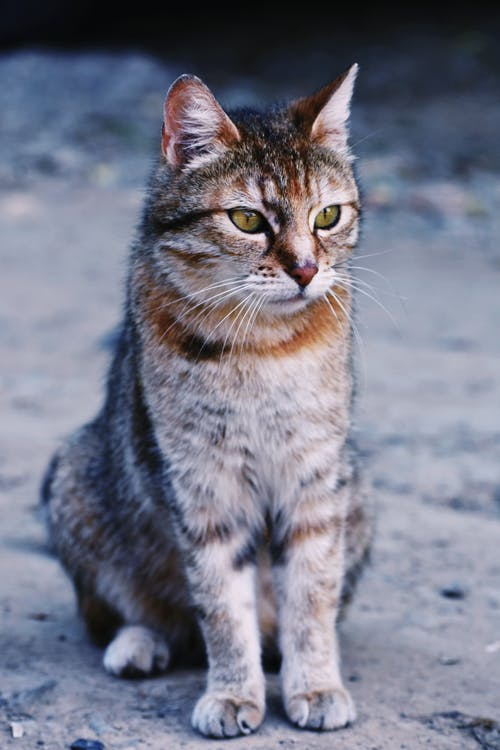 straycat-photo