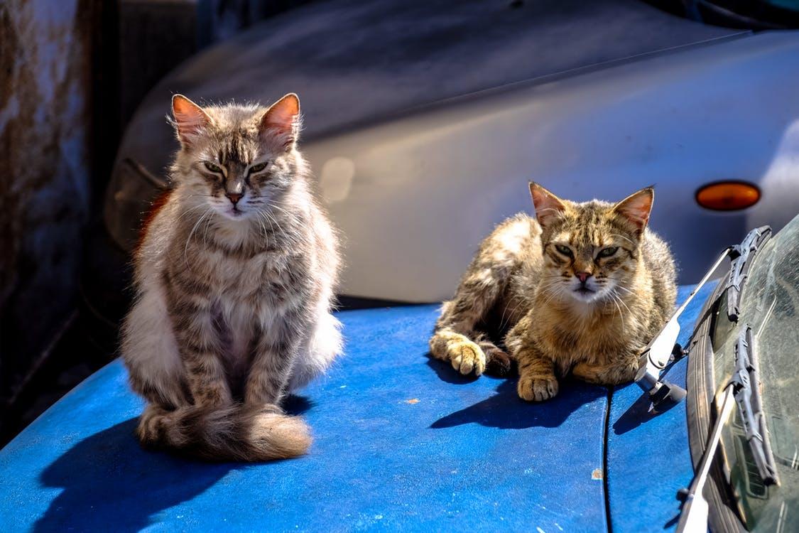 straycats-photo-2