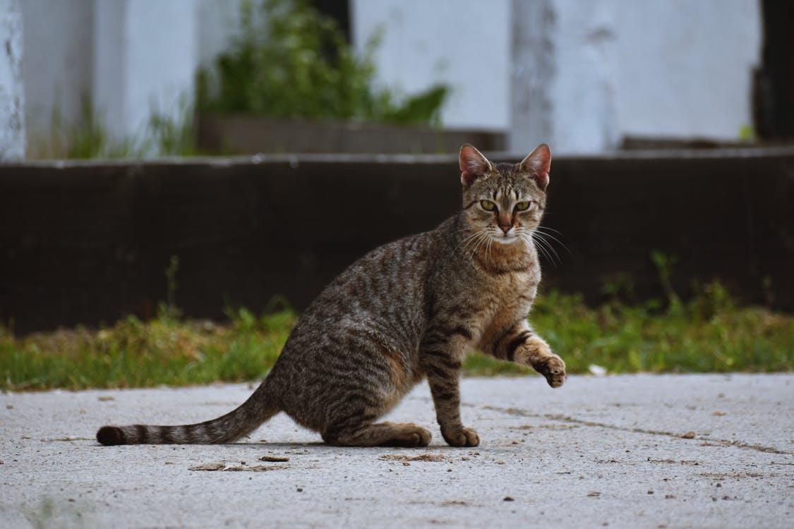 straycats-photo-3