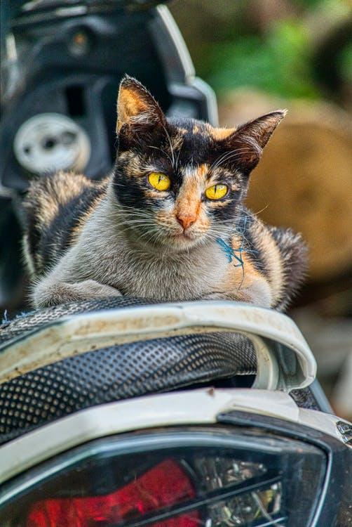 straycats-photo-4