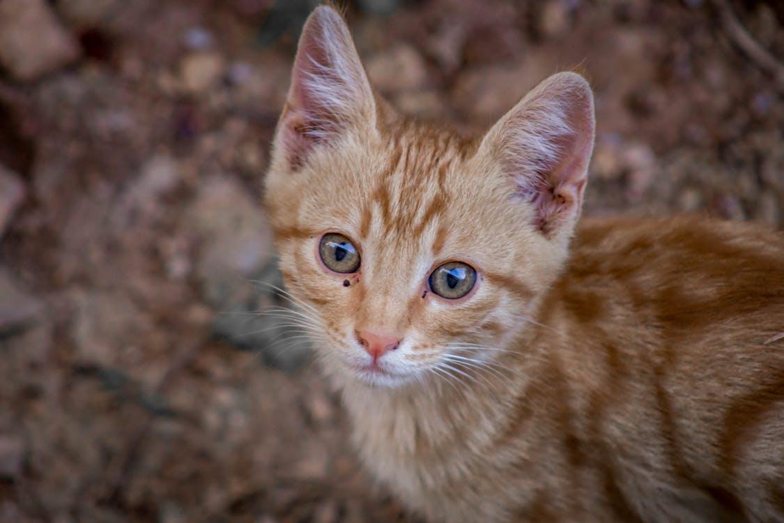 straycats-photo-5